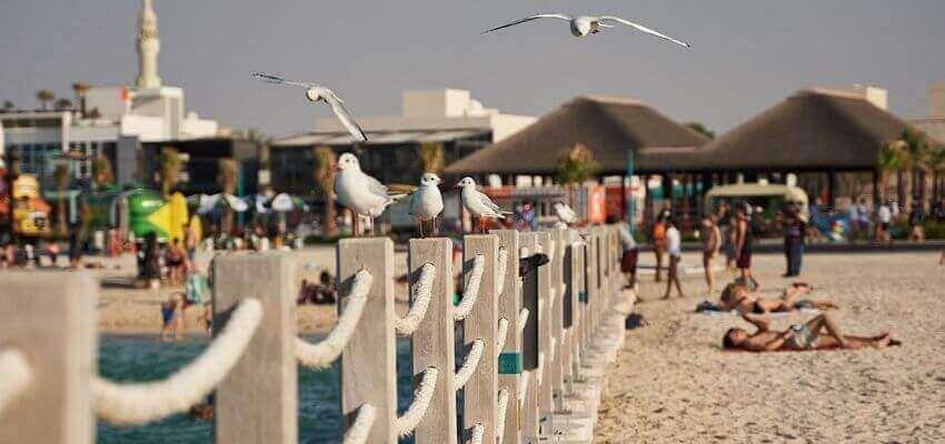 Kite Beach tourist attraction